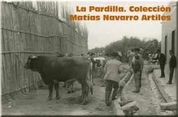 La Pardilla. Colección Matías Navarro Artiles